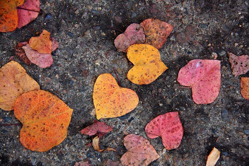 9963_heart_leaves